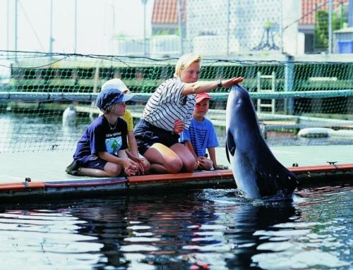 EVS στη Δανία // Φροντίδα θαλάσσιων θηλαστικών! / Αιτήσεις μέχρι 30 Σεπτεμβρίου!